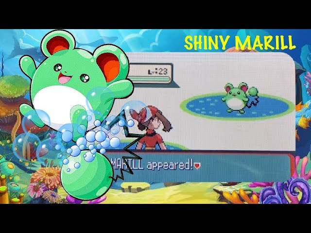 LIVE!! Yummy bubble gum Shiny Marill after 3,604 Surfing Encounters Sapphire [Full Odds] (Hustle #4)