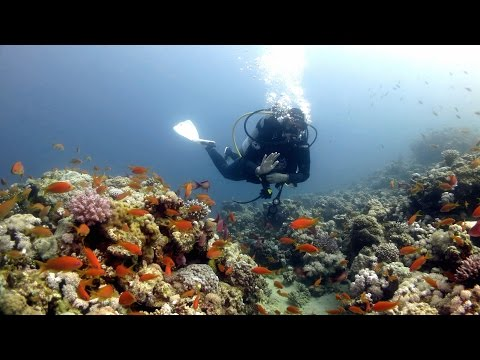 The Dive Sites of Dahab  (HD)