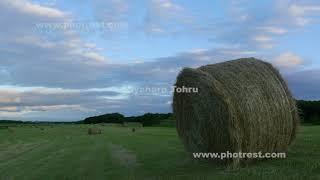 夏の牧草ロール