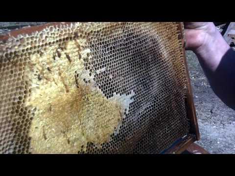Делюсь опытом пчеловода