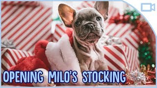 Christmas Day! Unwrapping Milo's Xmas Stocking & Gifts!