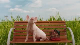 Schweinderl auf Reisen