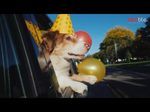Some Cool Ways To Celebrate National Dog day!!!