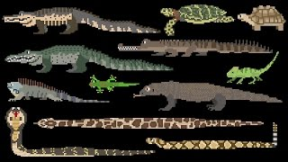 Reptiles - Snakes, Lizards, Crocodilians & Turtles - The Kids Picture Show (Fun & Educational)
