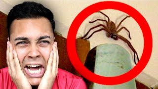 REACTING TO THE BIGGEST BUGS ON EARTH