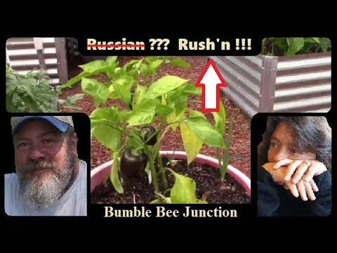 Russian Homesteaders Gardening In America ??? | We Are Today !!!