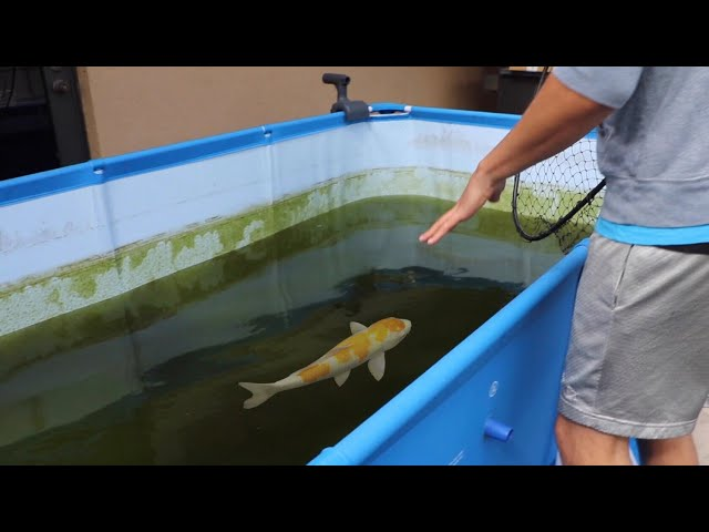 Saving Fish From BLACK Tar Water Aquarium!!