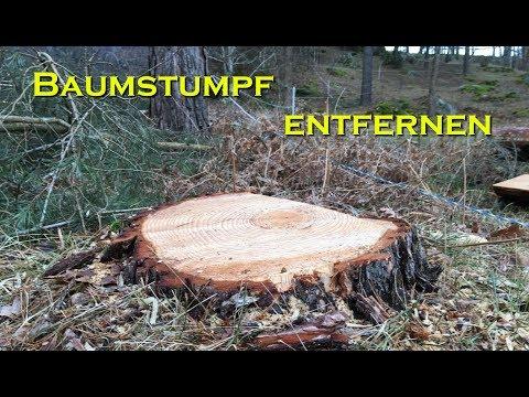 Baumstumpf entfernen auf die gemütliche Art
