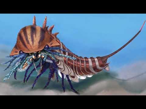 В Канаде нашли хищника-амфибию возрастом 508 миллионов лет