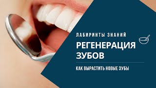 Сенсация - Зубы можно восстанавливать и выращивать