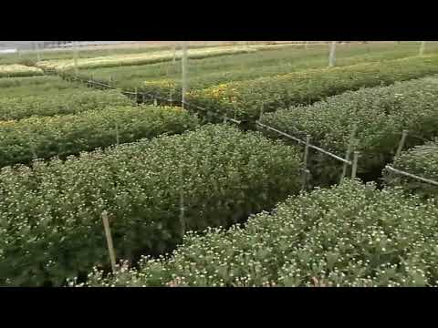 Video | Agricode Green Sdn Bhd