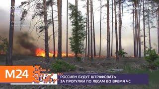 Россиян будут штрафовать за прогулки по лесам во время ЧС - Москва 24