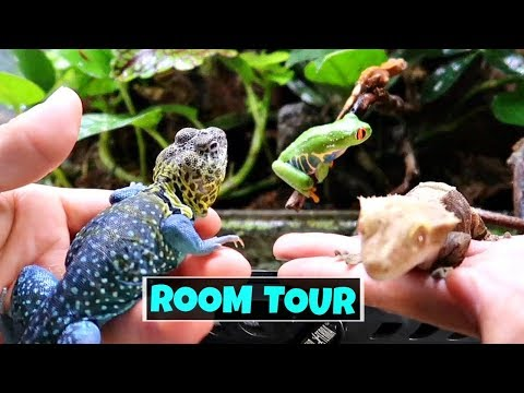 Reptile and Amphibian Room Tour October 2017