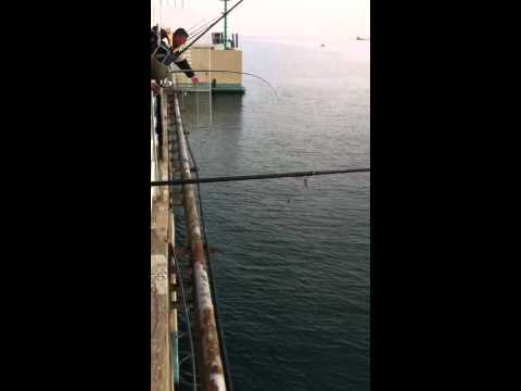 Il video di pescare in pesce grande