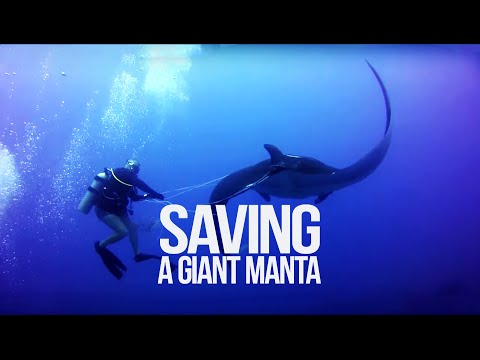 Manta-Befreiung, Guanacaste,Bat Islands,Big Scare/Black Rock,Costa Rica