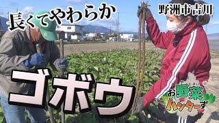 【お野菜ハンターず】吉川ゴボウ 野洲市吉川