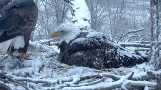 Decorah Eagles Mom and Dad Decorah Are Priceless lol 4/8/18