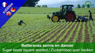 Betteraves semis en damier