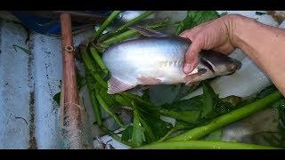 122\Vớt cà mè vinh dính luôn cá dồ | Săn bắt SÓC TRĂNG |