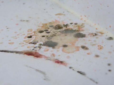 Die Analysen auf gribok der Nägel astana