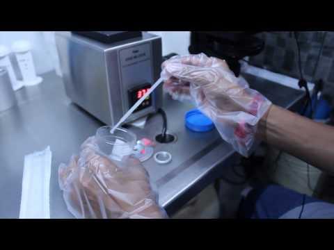 Clove powder mula sa parasites upang bumili ng