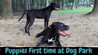 Taking puppies to the dog park!!