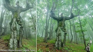 Bizarre tree looks just like a real person spotted in Bulgaria