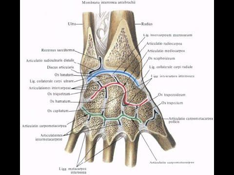 Тест Тинеля. Нарушения в области лучезапястного сустава