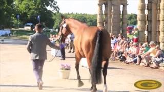 Elite Eventing| Bramham CCI*** Trot Up With Ben Hobday