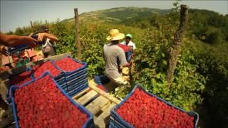 Soulfood Serbia - Raspberries