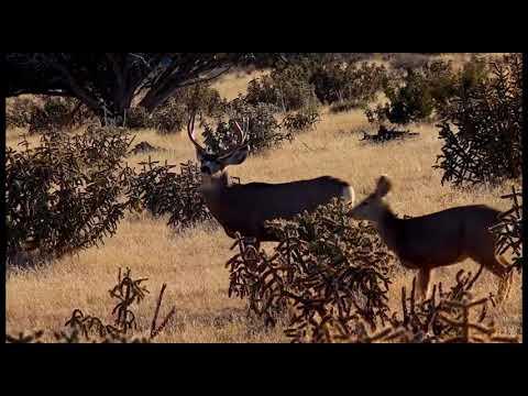 2021 Archers Choice – Episode 2 – Colorado Mule Deer Madness – Part 2