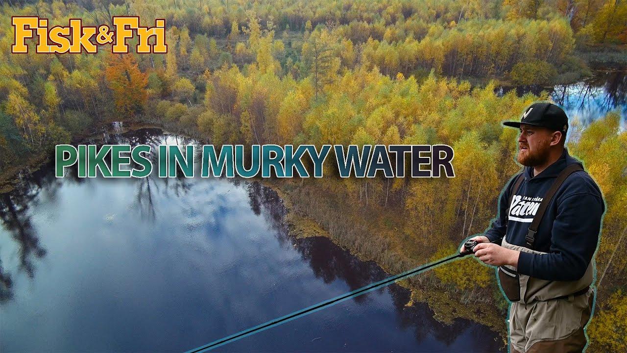NY VIDEO: Mosegedder i efteråret