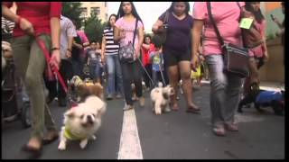 Pets On Parade For Patron Saint Feast