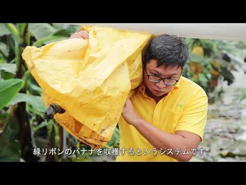 臺灣香蕉特色(日文版)