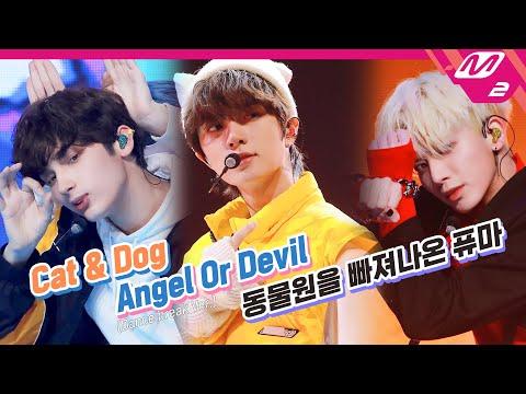 TXT (투모로우바이투게더) - Cat & Dog + Angel Or Devil + 동물원을 빠져나온…
