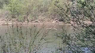 preview picture of video 'Treibender Baum auf der Theiß bei Vásárosnamény (Ungarn)'