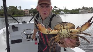 CRAB {Catch Clean Cook} Blue Crab, King Crab, Snow Crab, Stone Crab, Dungeness Crab- TASTE TEST