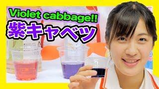 10の手順で自由研究紫キャベツで実験しよう!科学実験