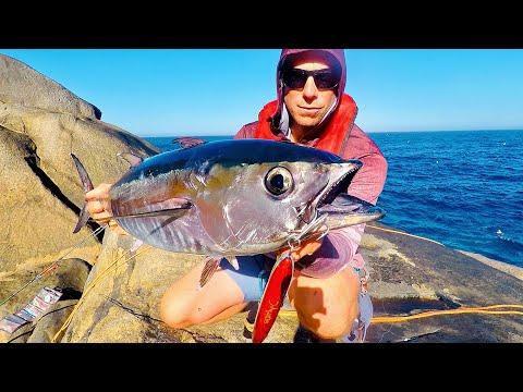 Tunfisk fra klipperne