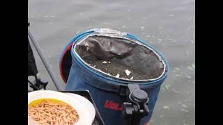 Рыбалка в кинешме на волге