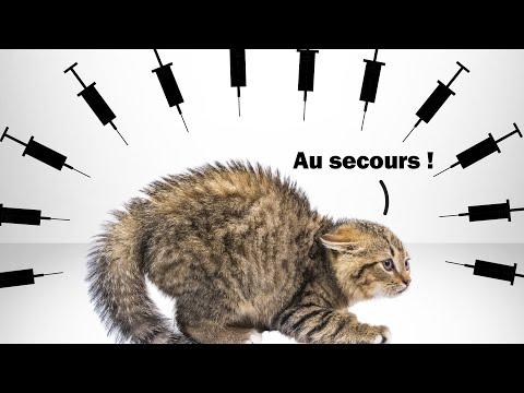 Kolik koťátek umře v roce 2021 kvůli očkování?