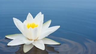 Meditation, Zen Music, Relaxation Music, Chakra, Relaxing Music for Stress Relief, Relax, ☯2557