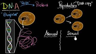 Grade 7 Science | Reproduction, DNA, sexual & asexual | Khan Academy