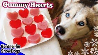Valentine's Day Strawberry Gummy Dog Treats | DIY Dog Treats Recipe 93 | Homemade Dog Treats
