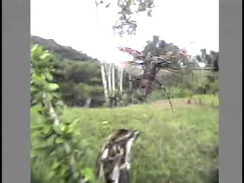 テナガカミキリの飛翔
