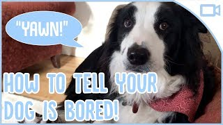 How to Tell if Your Dog is Bored