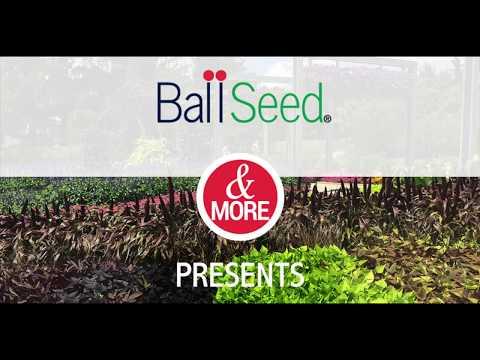 Celebrating The Gardens at Ball thumbnail