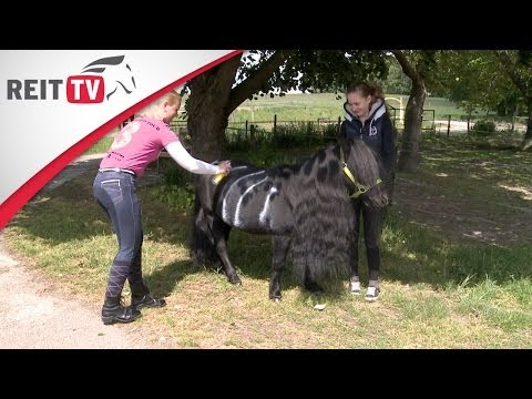 Pferdepflege: Fliegenschutz für das Pferd