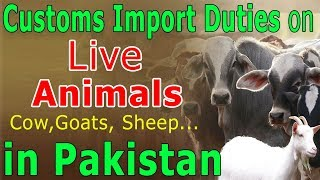 Customs Import Duties live Animals Cow, Goats, and Sheep in Pakistan - Import Duty on Livestock