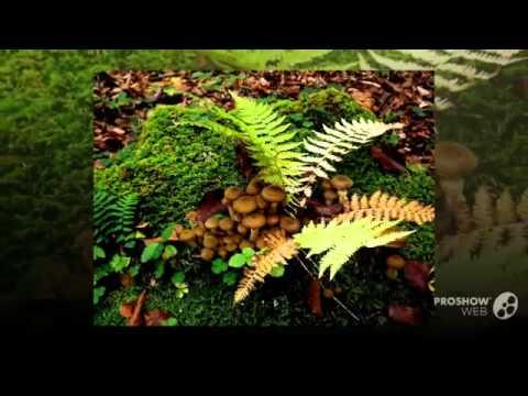Gyógynövények, amelyek kiküszöbölik a parazitákat